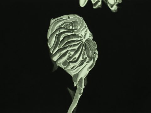 Galería pazYcomedias / Ernesto Casero